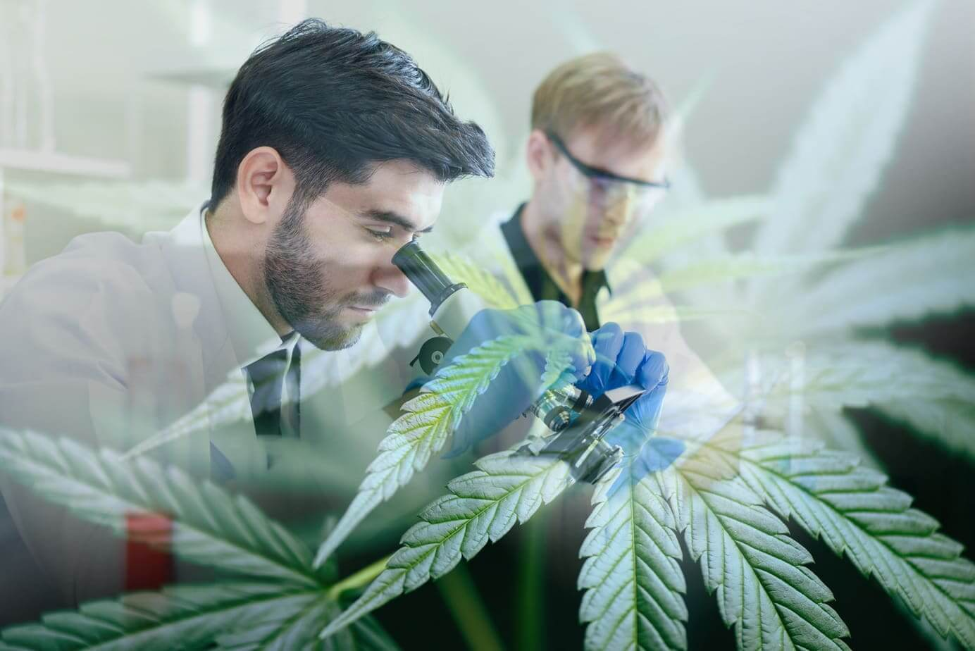 THCP und CBDP – Forscher entdecken 2 neue Cannabinoide